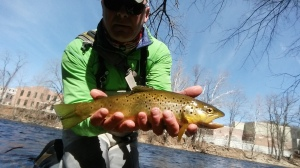 A nice brown outside the TMA